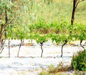Hail in Angaston